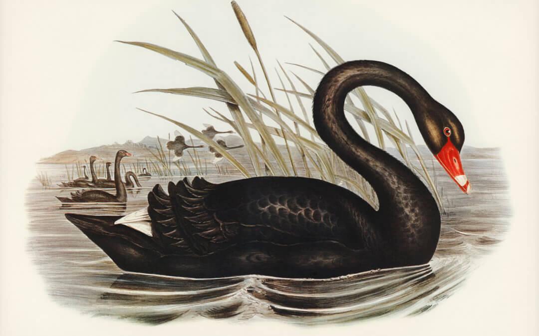 Černá labuť jménem coronavirus spustí finanční krizi